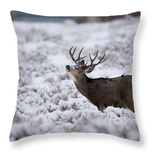 Mule Deer Throw Pillow featuring the photograph Testing The Air by Wildlife Fine Art