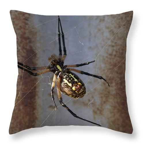 Texas Throw Pillow featuring the photograph Texas Barn Spider In Web 2 by Big E tv Photography