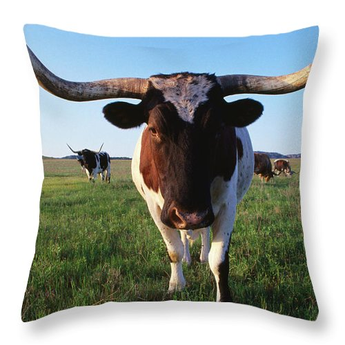 Horned Throw Pillow featuring the photograph Texas Longhorn Cattle by John Elk