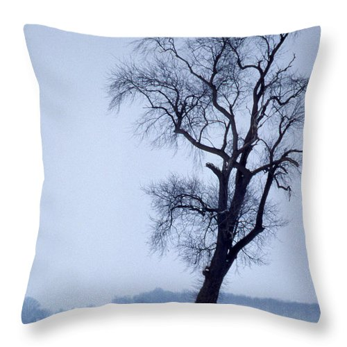 Scenic Tours Throw Pillow featuring the photograph The Patriarch In Color by Skip Willits