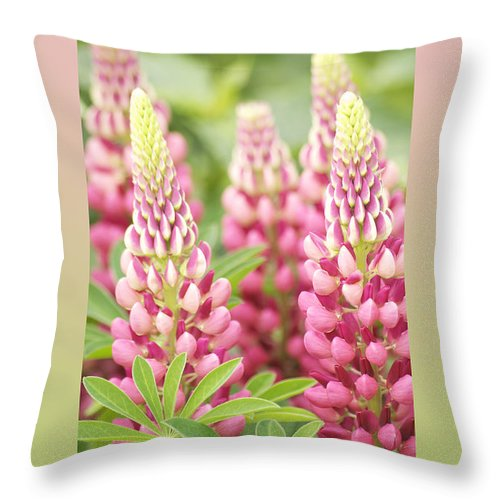 Lupine Throw Pillow featuring the photograph Thank You Lupine Pastels by Michael Peychich