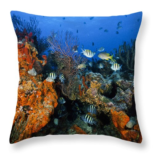 Art Throw Pillow featuring the photograph The Active Reef by Sandra Edwards