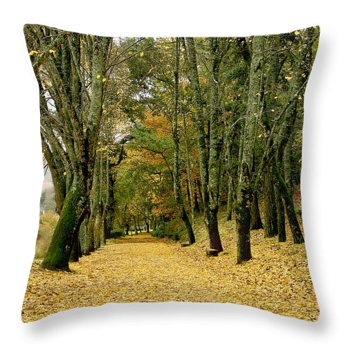 Autumn Throw Pillow featuring the photograph The Autumn Path by Paulo Monteiro