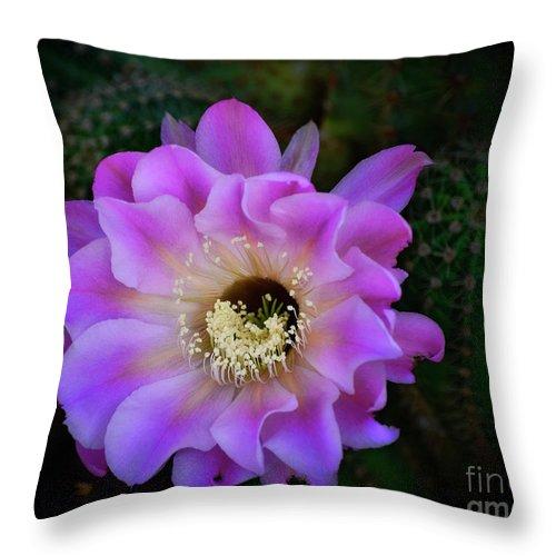Echinopsis Aurea Throw Pillow featuring the photograph The Beauty Of Nature by Saija Lehtonen