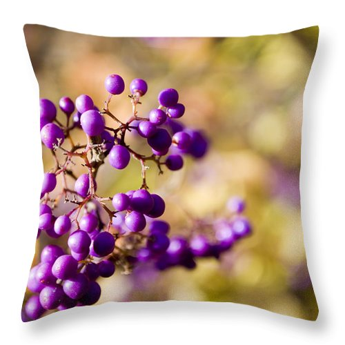 Sunlight Throw Pillow featuring the photograph The Berries by Breanna Calkins