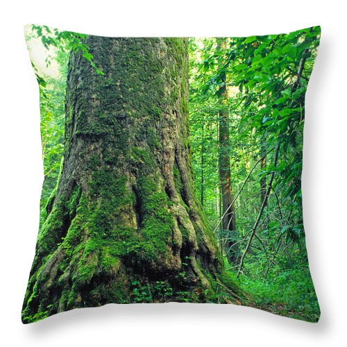 West Virginia Throw Pillow featuring the photograph The Big Sycamore Tree by Thomas R Fletcher