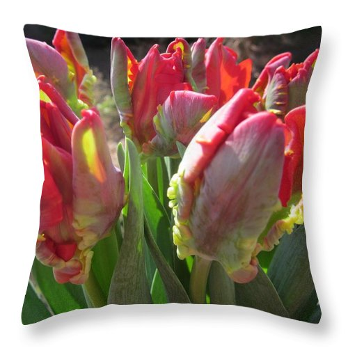 Flowerromance Framed Prints Throw Pillow featuring the photograph The Bouquet by Rosita Larsson