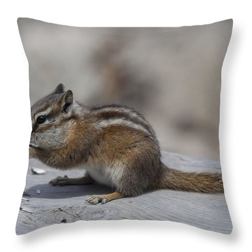 Wildlife Throw Pillow featuring the photograph The Chipmunk by Amber Kresge