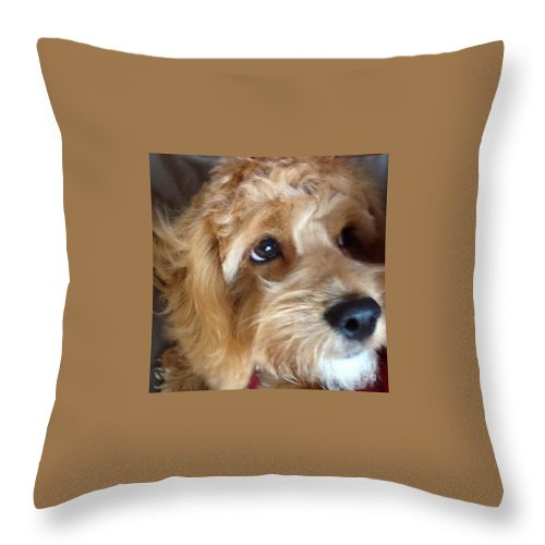 Closeup Throw Pillow featuring the photograph The Closeup by Christy Gendalia