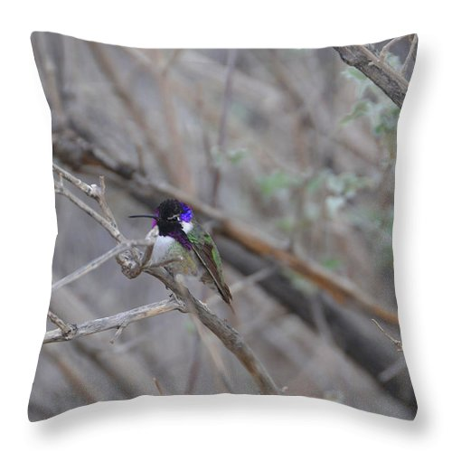 Hummers Throw Pillow featuring the photograph The Colors Of The Costas by Lynn Bauer