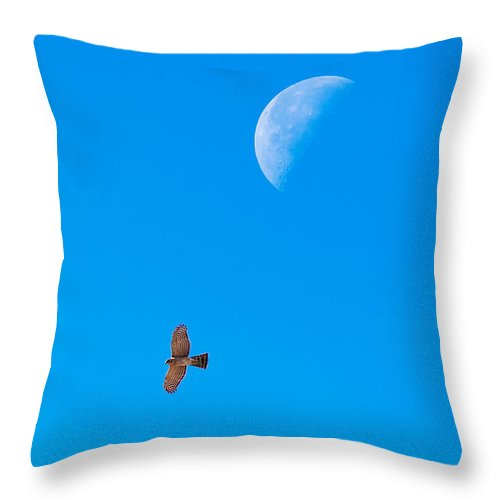 Cooper's Hawk Throw Pillow featuring the photograph The Cooper's Hawk And The Moon by Onyonet Photo Studios