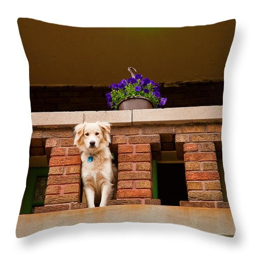 Dog Throw Pillow featuring the photograph The Critic by Kristi Swift