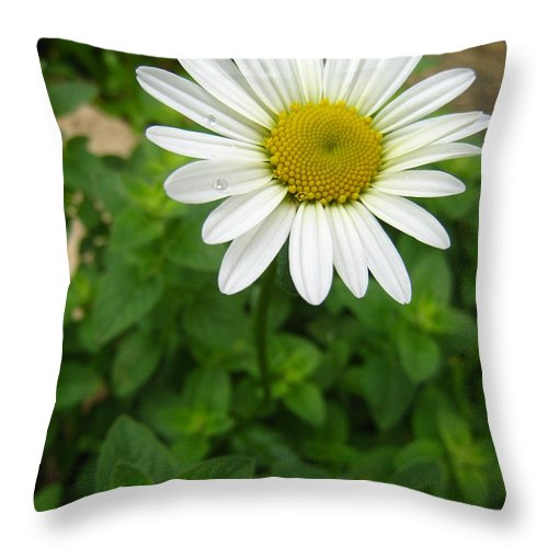 Daisy Throw Pillow featuring the photograph Natures Tear Drops by Jennifer E Doll