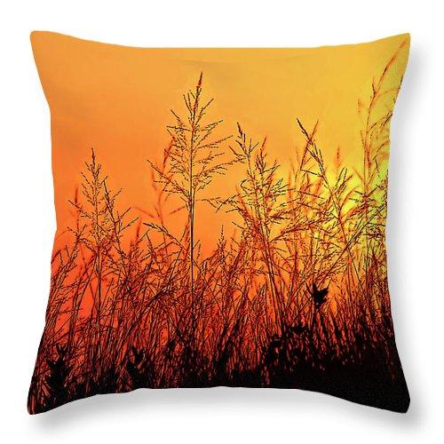 Sauble Beach Throw Pillow featuring the photograph The Dunes by Steve Harrington