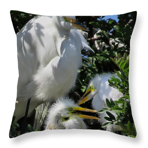 Egret Throw Pillow featuring the photograph The Egret Family by Jennie Breeze