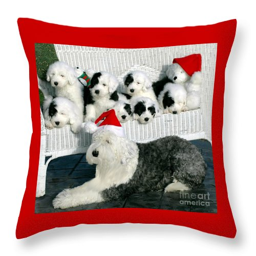 Old Throw Pillow featuring the photograph The Entire Family by Kathleen Struckle