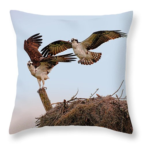 Osprey Throw Pillow featuring the photograph The Exhibitionists by Photos By Cassandra