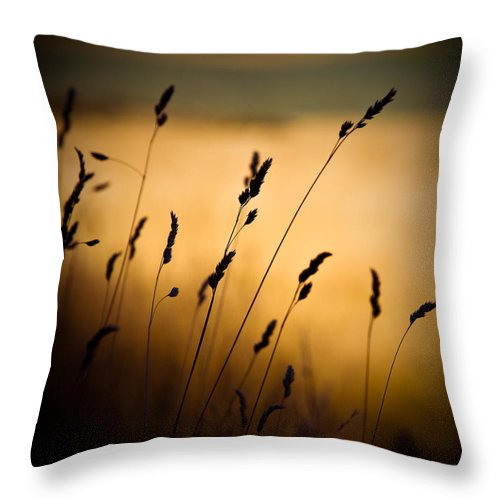 Filed At Sunset Throw Pillow featuring the photograph The Field by Dave Bowman