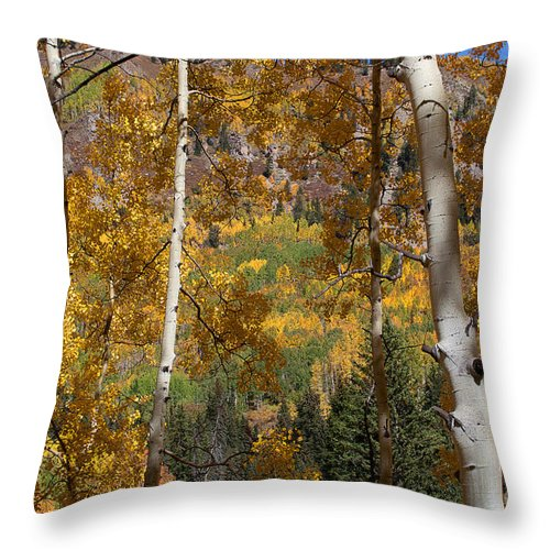 Fall Aspen Throw Pillow featuring the photograph The Forest For The Trees by Jim Garrison