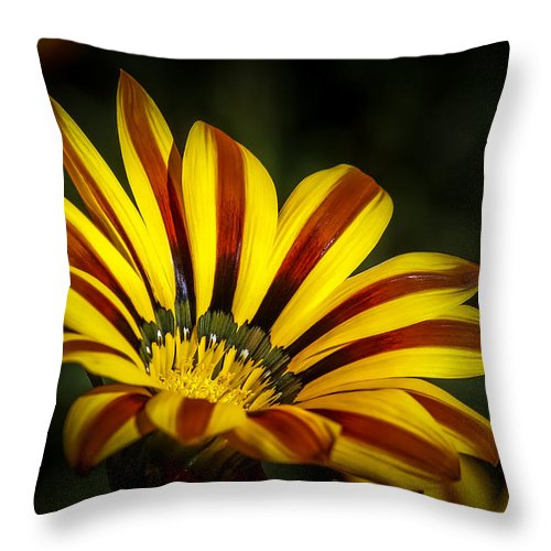 Gazanias Throw Pillow featuring the photograph The Gazania by Ernie Echols