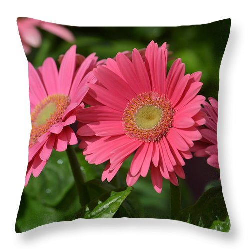 The Gerber Triplets Throw Pillow featuring the photograph The Gerber Triplets by Maria Urso
