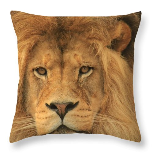 Lion Throw Pillow featuring the photograph The Glory Of A King by Laddie Halupa