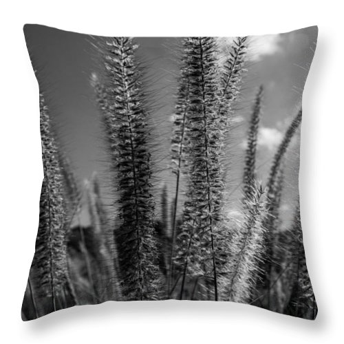 Black And White Art Throw Pillow featuring the photograph The Grass Is Greener by Ronald Hunt