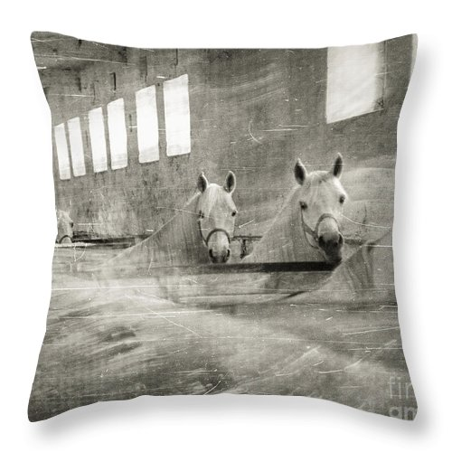 Grey Throw Pillow featuring the photograph The Grey Mares by Angel Ciesniarska