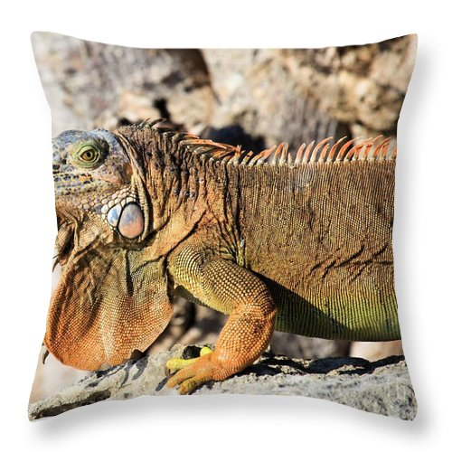 Iguana Throw Pillow featuring the photograph The Guardian by Adam Jewell