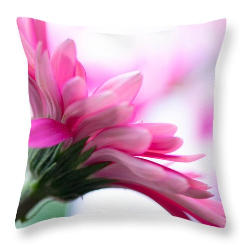 Pink Throw Pillow featuring the photograph The Happy Flower Pink Daisy by Michael Moriarty