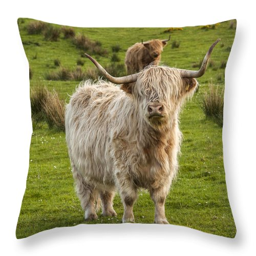 Scotland Throw Pillow featuring the photograph The Highland Dude by Terry Cosgrave