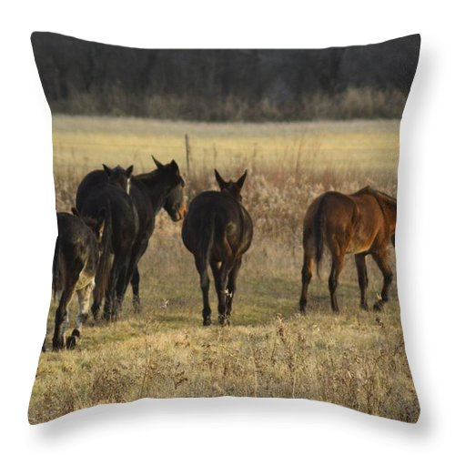Jackass Throw Pillow featuring the photograph The Jackasses by Bonfire Photography