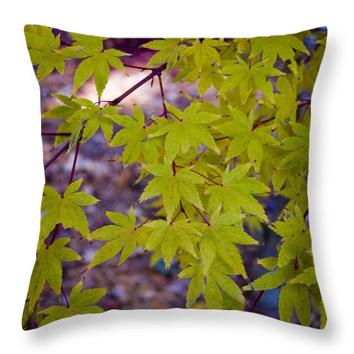 Fall Throw Pillow featuring the photograph The Japanese Maple by Breanna Calkins
