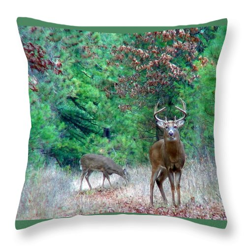 Whitetail Throw Pillow featuring the photograph The King by Thomas Young