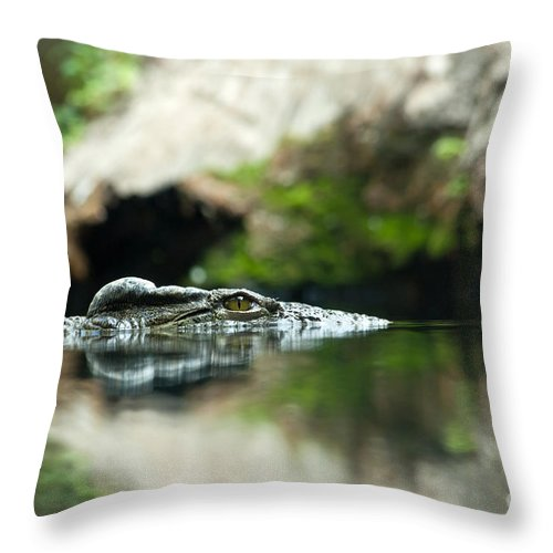 Crocodile Throw Pillow featuring the photograph The Kroko by Christine Sponchia
