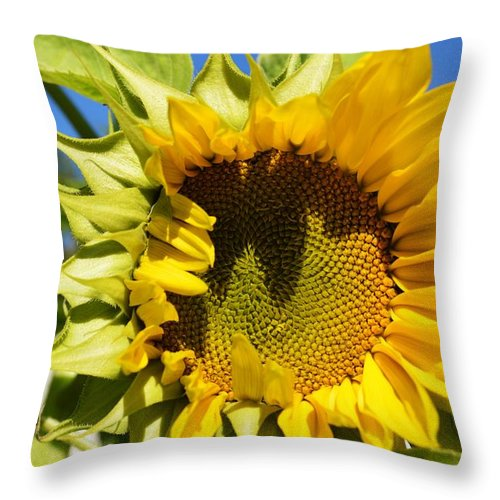 Yellow Throw Pillow featuring the photograph The Last Of Summer 1 by Dacia Doroff