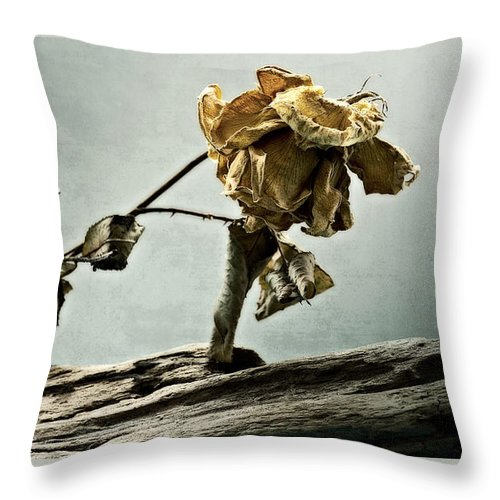 Rose Throw Pillow featuring the photograph The Last Yellow Rose Of Summer by Donna Lee