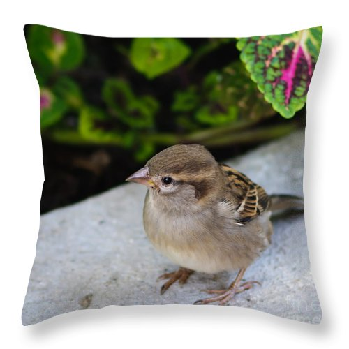 Birds Throw Pillow featuring the photograph The Lilttle Beggar by Charles Dobbs