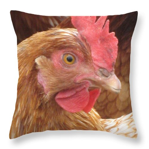 Bird Throw Pillow featuring the photograph The Little Red Chicken by Jennifer E Doll
