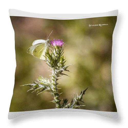 Butterfly Throw Pillow featuring the photograph The Lonely Butterfly by Stwayne Keubrick