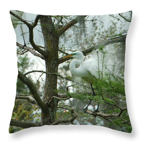 Egret Throw Pillow featuring the photograph The Mating Dance by Suzanne Gaff