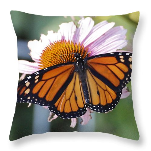 Butterfly Throw Pillow featuring the photograph The Monarch Landed by Roxy Lang