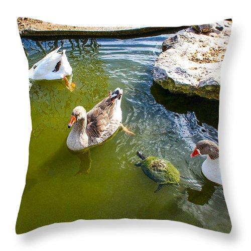 Ducks Throw Pillow featuring the photograph The Neighbors Next Door by Carlos Diaz