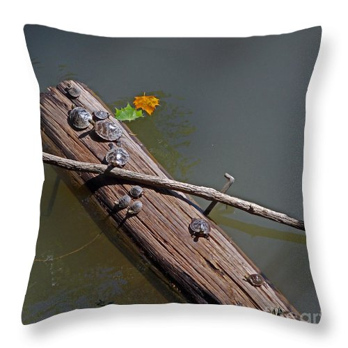 Nature Throw Pillow featuring the photograph The Nursery by Skip Willits