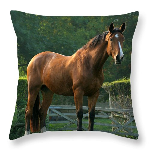 Horse Throw Pillow featuring the photograph The Observer by Angel Ciesniarska