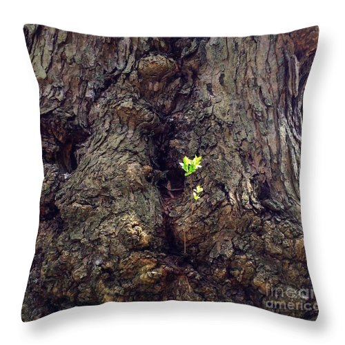 Landscape Throw Pillow featuring the photograph The Old And The New by Becky Lupe
