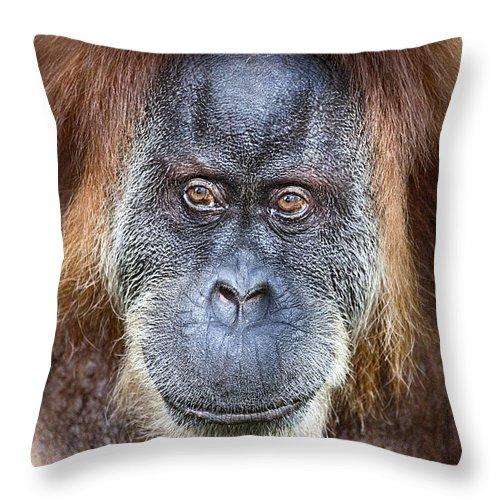 Orangutan Throw Pillow featuring the photograph The Orangutan Album V4 by Douglas Barnard