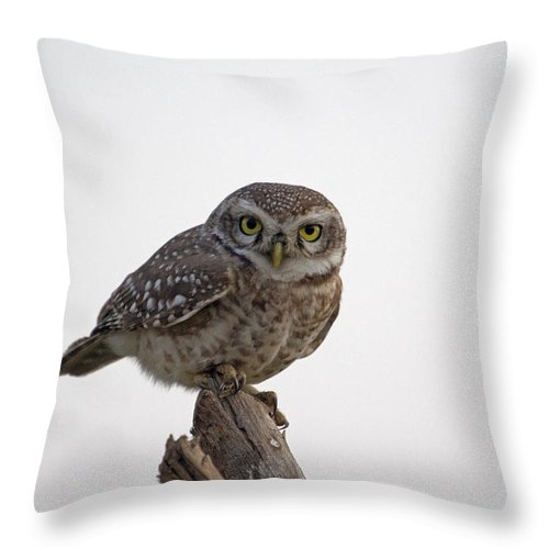 Birds Throw Pillow featuring the photograph The Owl by S S Cheema