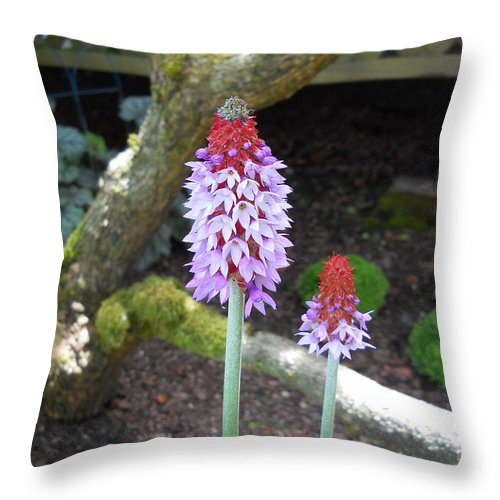 Garden Throw Pillow featuring the photograph The Paintbrush by Artzmakerz