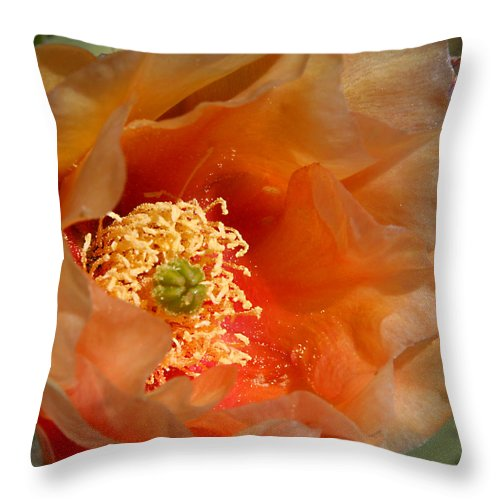 Flower Throw Pillow featuring the photograph The Prickly Pear World by Joe Kozlowski
